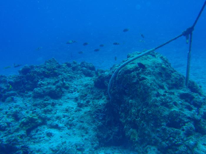 ロープ型のアンカーとライン