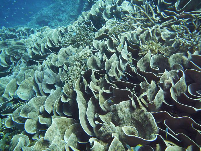 希少・貴重な珊瑚の上は、当然ながら着低禁止