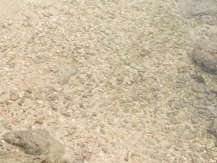ゴロタ石は波打ち際などに多くあります。